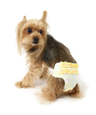 PET PARADISE プリティブーケ 小花柄サニタリーパンツ 抗菌防臭[小型犬] 黄