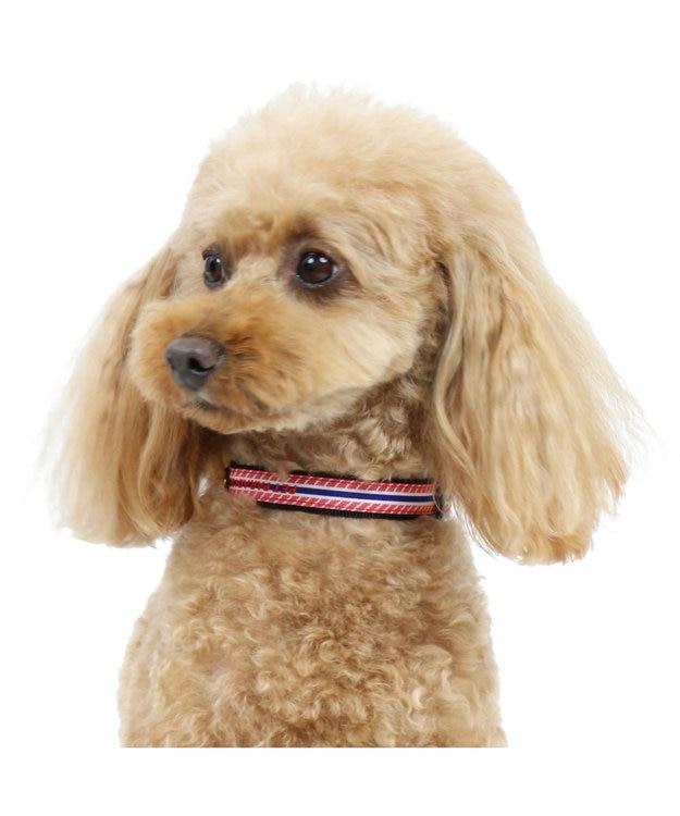 PET PARADISE ペットパラダイス ロゴ ボーダー 首輪 赤 3S〔小型犬〕