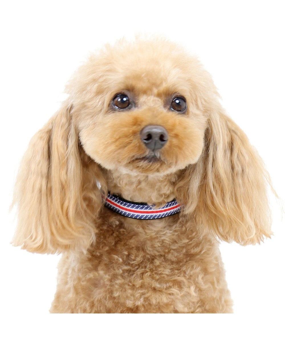 PET PARADISE ペットパラダイス ロゴ ボーダー 首輪 青 S〔小型犬〕 紺(ネイビー・インディゴ)