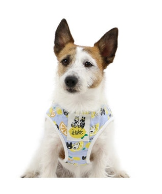 PET PARADISE リサとガスパール シトラス ベスト ハーネス S 〔小型犬〕 水色